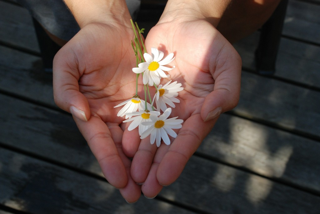 flower-22656_1920